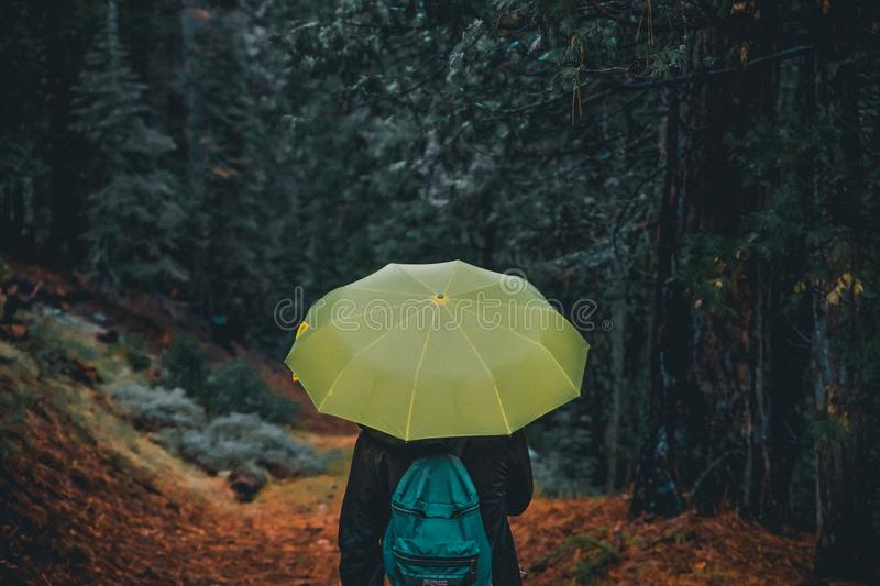 Photography of a Person Holding Yellow Umbrella royalty free stock images