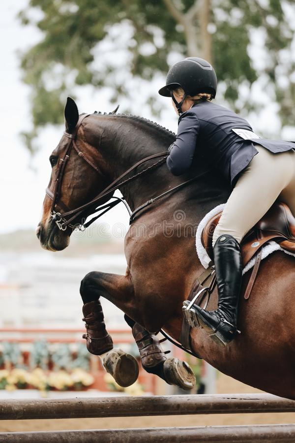 Photography of Person Riding Brown Horse royalty free stock images