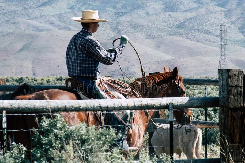 Photography of a Person Riding Horse stock photography