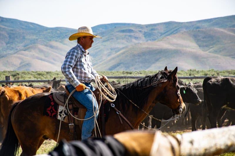 Photography of a Person Riding Horse stock photos