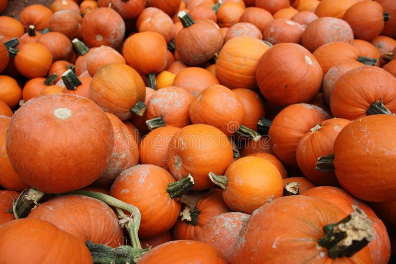 Photography of Pile of Pumpkins stock photo