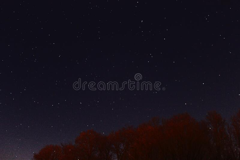Photography of Red Leaf Tree at Nigh Time stock images