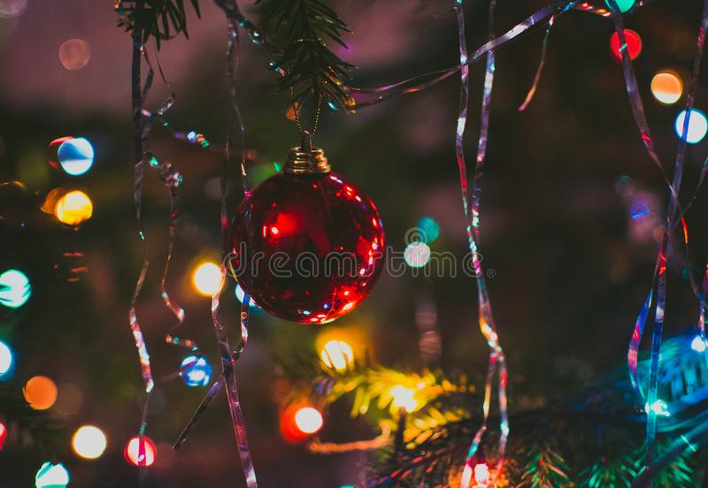 Photography of Red String Lights Hanging on Green Trees royalty free stock photos