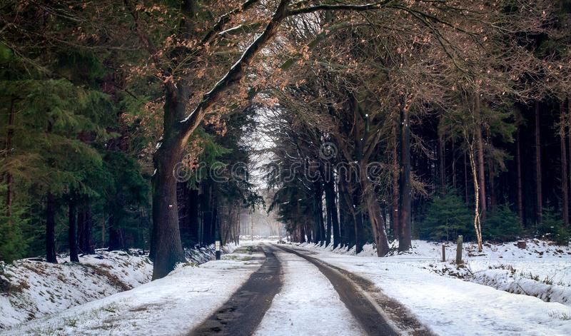 Photography of Road during Winter Season royalty free stock photography