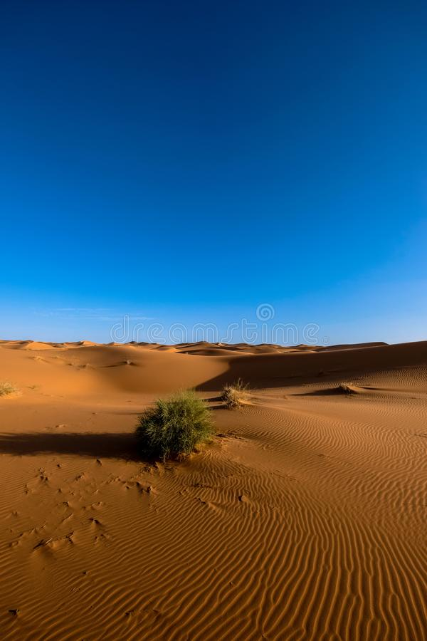 Photography of Sand Dunes Under Blue Sky royalty free stock photography