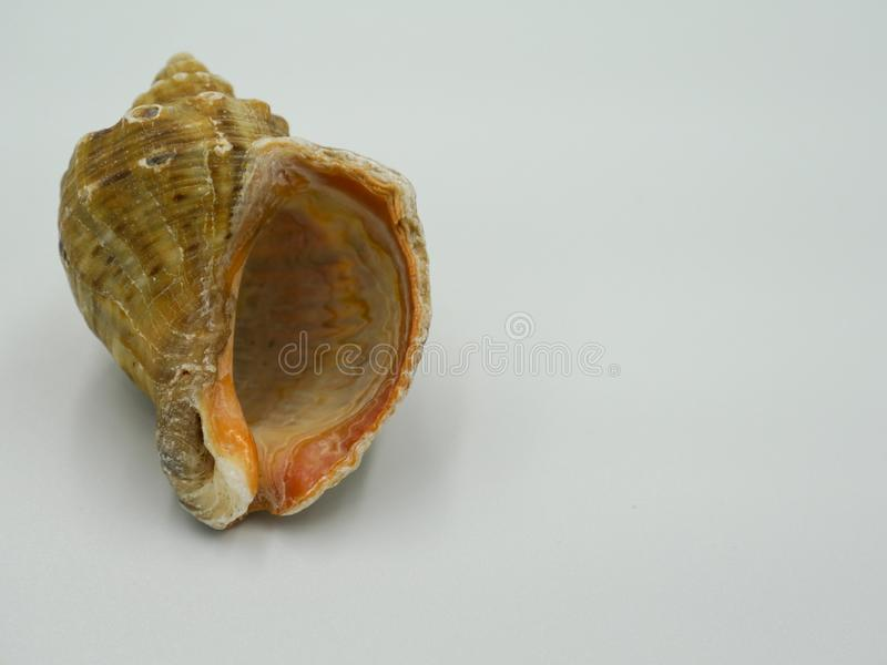 Sea shell souvenir isolated on a white background royalty free stock photos