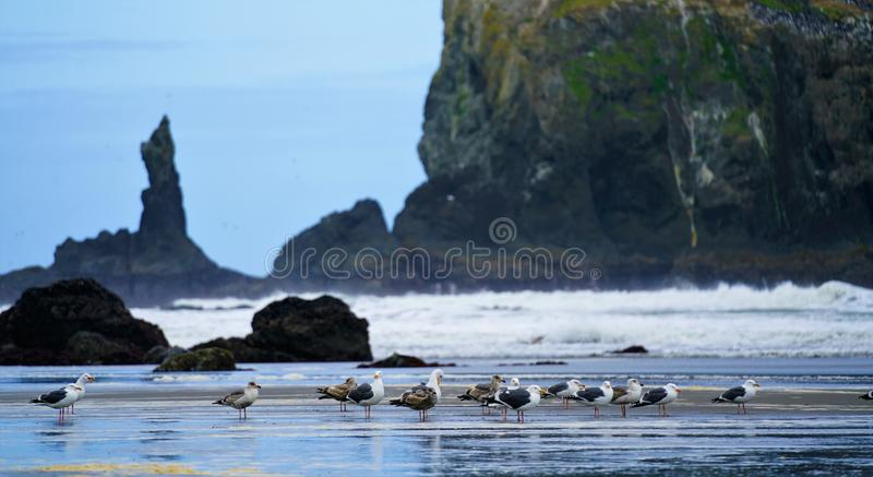 Photography of Seagulls on Seashore stock image