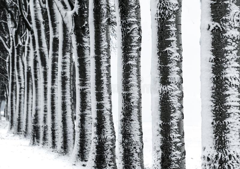 Photography of Trees during Winter stock image