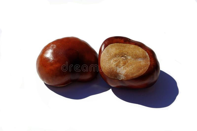 Photography of two chestnuts isolated on white background stock photos