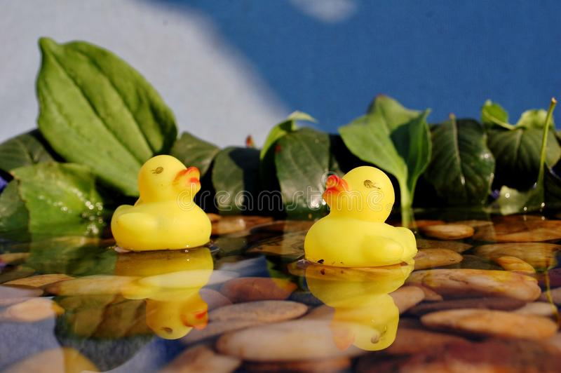 Two little rubber ducks in water royalty free stock photos