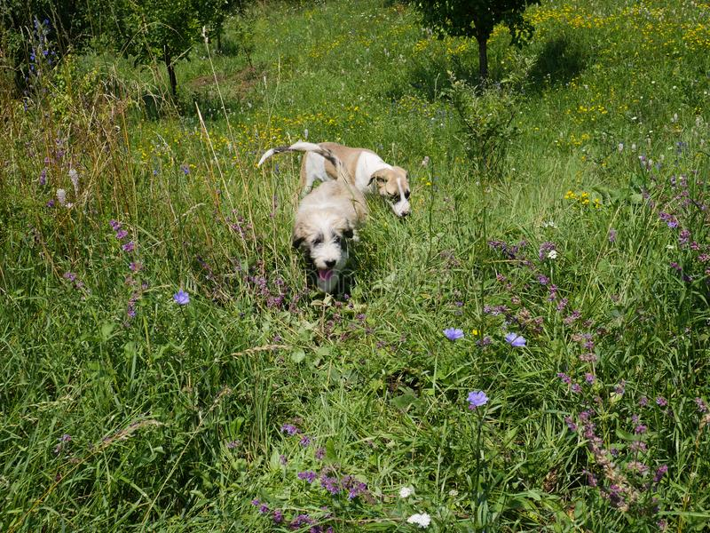 Two puppies in long grass stock images
