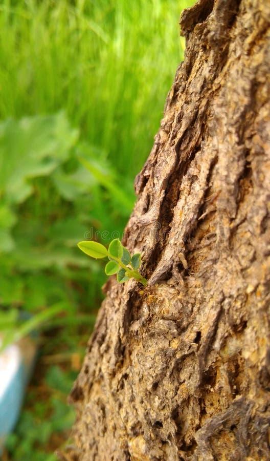 Plants. Photography by Umair Bhutta Green stock photos