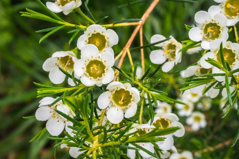 Photography of white flowers in spring garden stock image