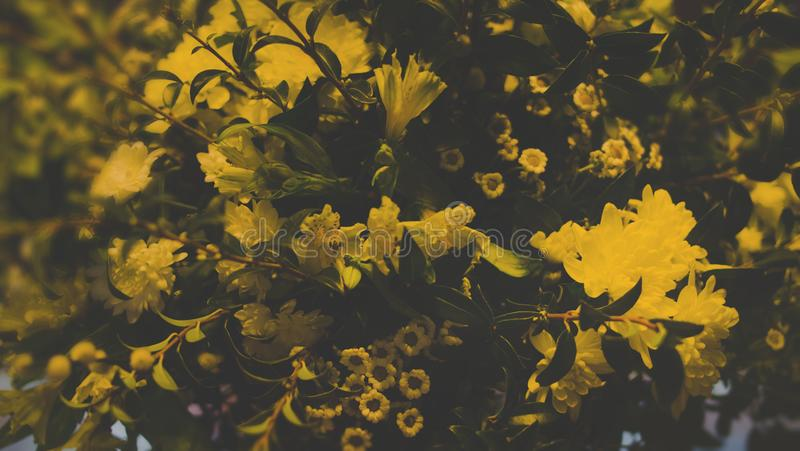 Free public domain cc0 image photography of yellow flowers picture photography of yellow flowers mightylinksfo
