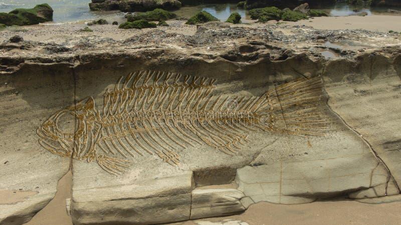 Photomontage d'un grand poisson d'imagination fossile sur les couches qui forment sur une pierre photographie stock