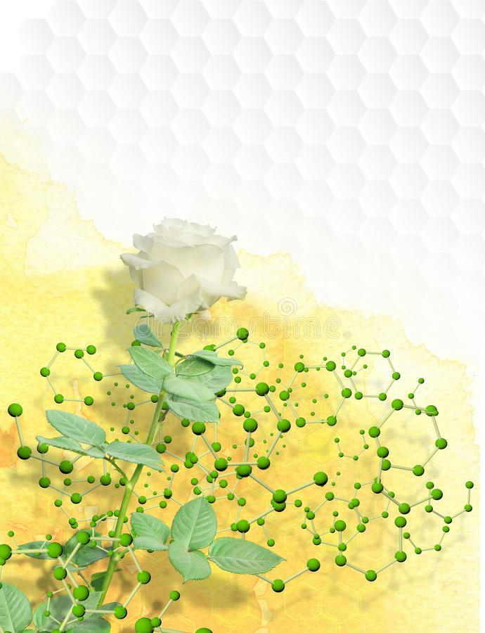 Photomontage da rosa branca com a haste longa envolvida em uma estrutura das moléculas com esferas verdes imagens de stock