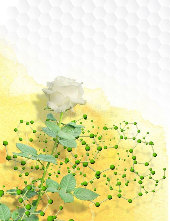 Photomontage de la rose blanche de longue tige enveloppée dans une structure des molécules avec les sphères vertes images stock