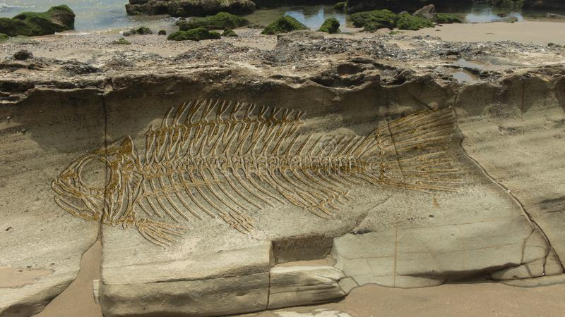 Photomontage of a large fantasy fish fossil on the layers that form on a stone stock photography