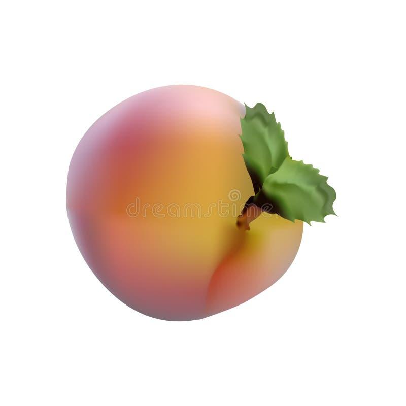 Download Photorealistic Beelden Van Rode Fruit Rijpe Perzik Stock Illustratie - Illustratie bestaande uit grafisch, drank: 39111972