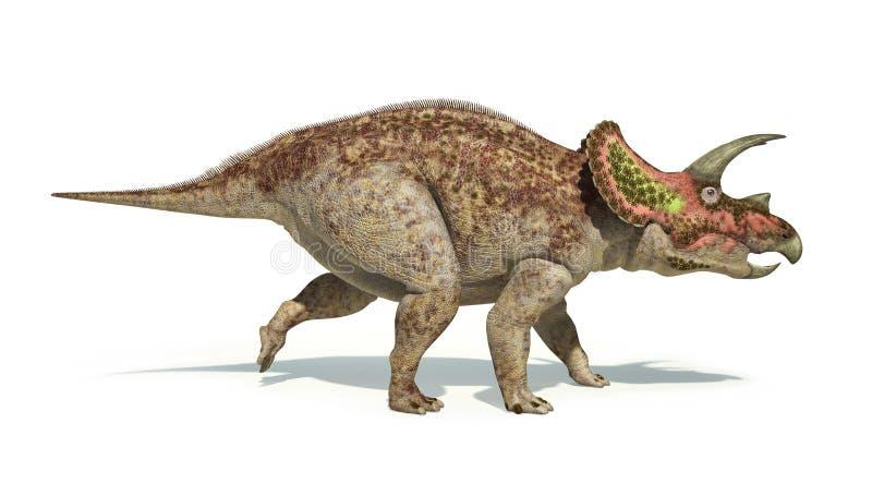 Photorealistic en wetenschappelijk correct r van de Triceratopsdinosaurus vector illustratie