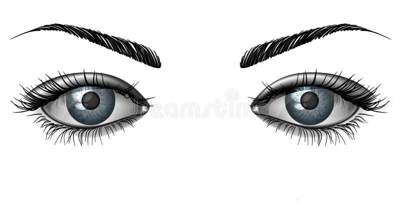 Photorealistic human female eyes close up. Realistic female eye close up, wide open glance with eyebrows