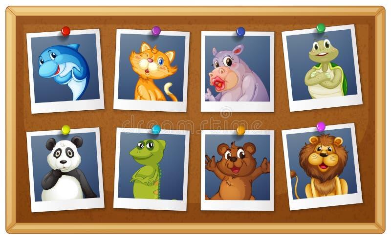 Photos of animals. Illustration of set of animals phot vector illustration