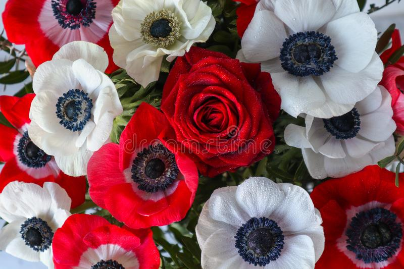 Photos of a bouquet of red and white flowers anemone and roses royalty free stock images