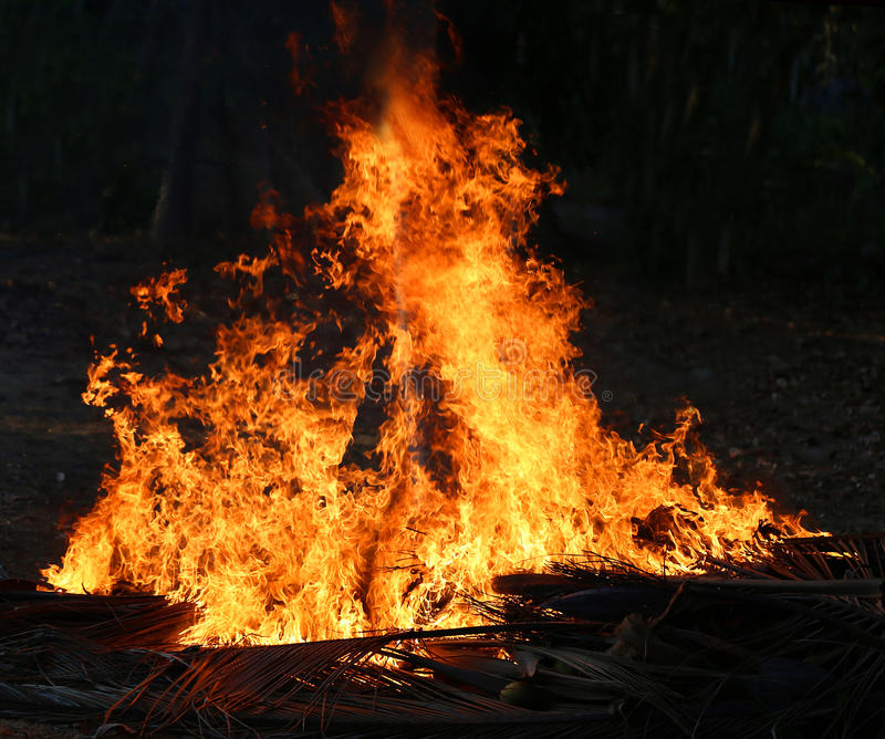 Photos bright big fire. In the dark jungle background royalty free stock image