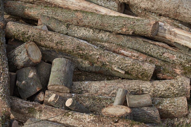 Photos de la texture en bois photos libres de droits