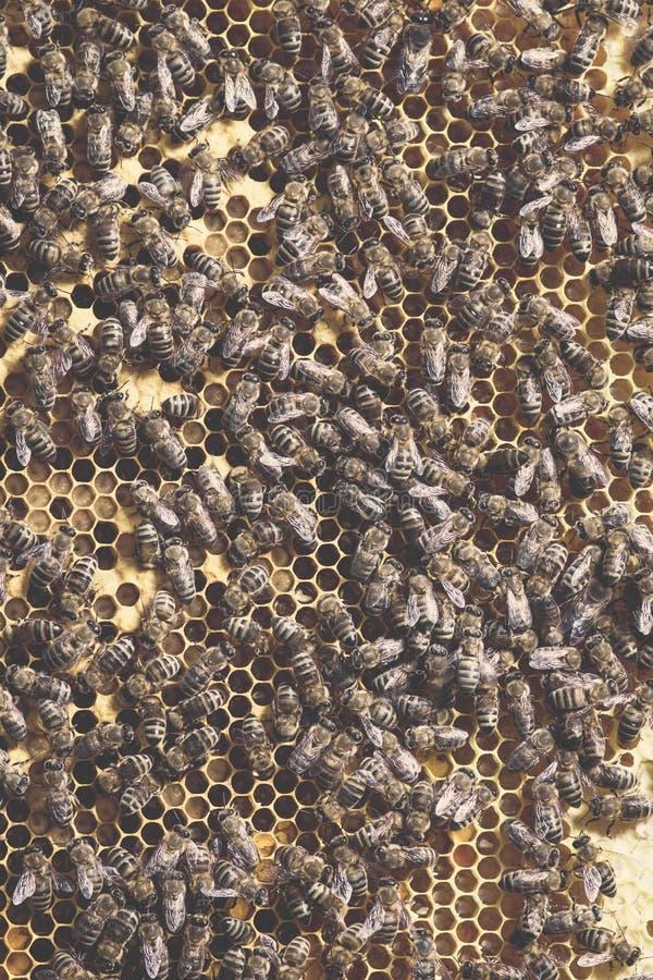 photos des abeilles avec la séance courbe sur des sites avec les larves et le miel qu'ils se sont préparé à l'hiver photo libre de droits