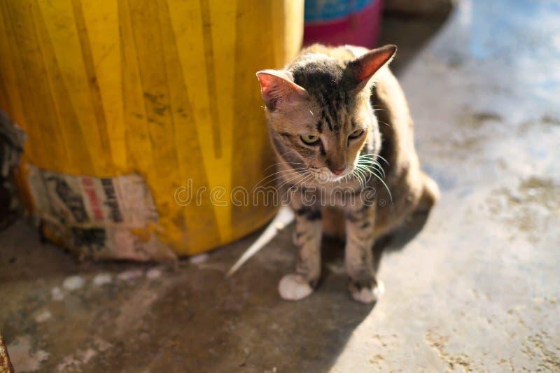Photos des chats mignons qui ont lieu le soir, où la lumière brille pendant l'heure d'or arrière photo libre de droits