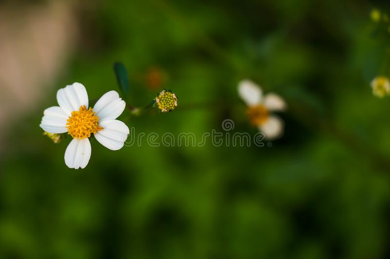 The grass of flower in rainy day stock photos
