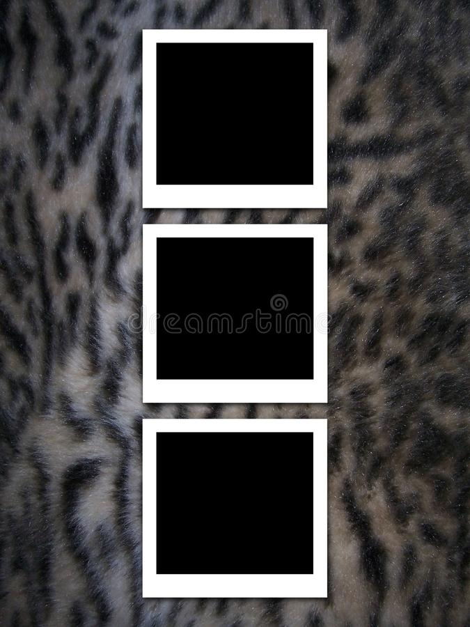 Photos on fur