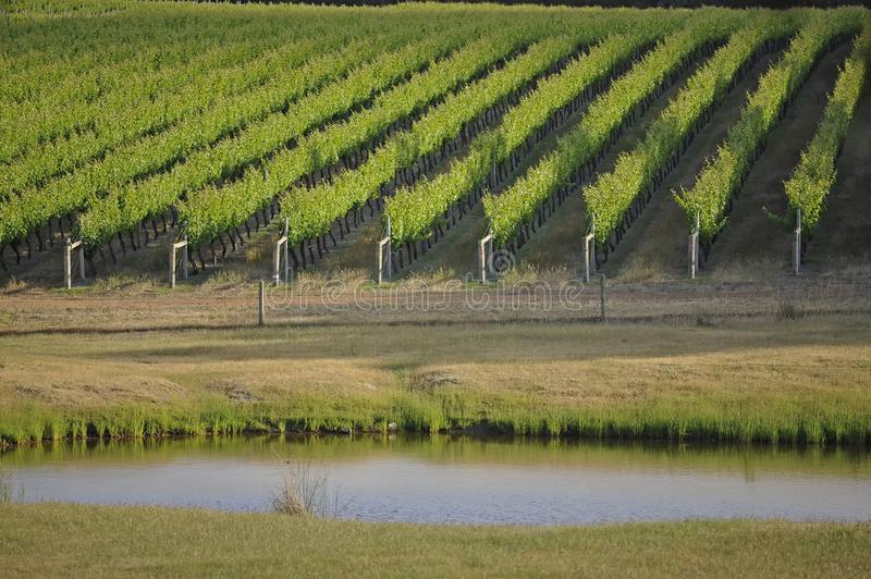 Margaret River Vinyards, with a different perspective, and Aspect. royalty free stock photography