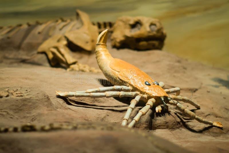 Photos of some dinosaur fossils replicas stock photos