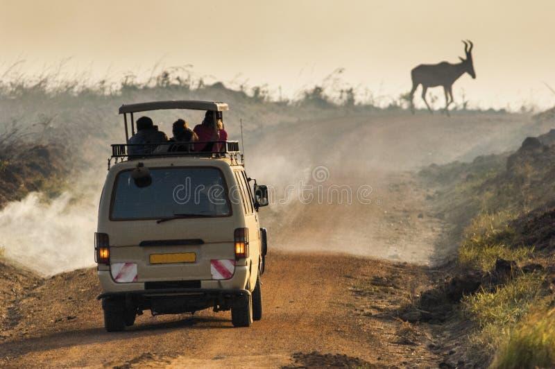 Photosafari Antilopet Kudu passerar vägen till en rök från en stor brand arkivfoto