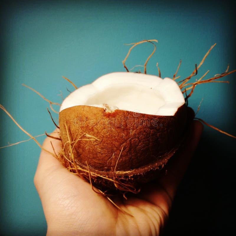 photoshoot för kokosnötturkosnotphotoshop fotografering för bildbyråer
