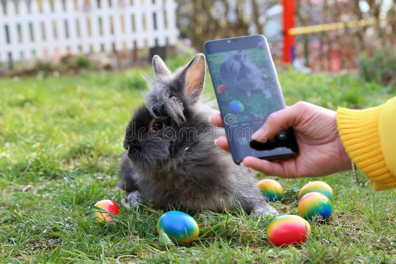 Funny little bunnies among Easter eggs on the grass stock images