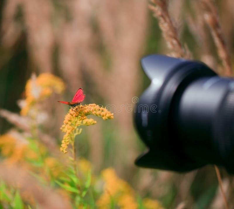 photoshooting makro- outside fotografia stock
