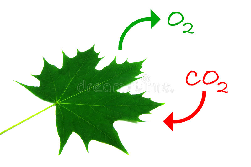 Photosynthesis 2 royalty free illustration