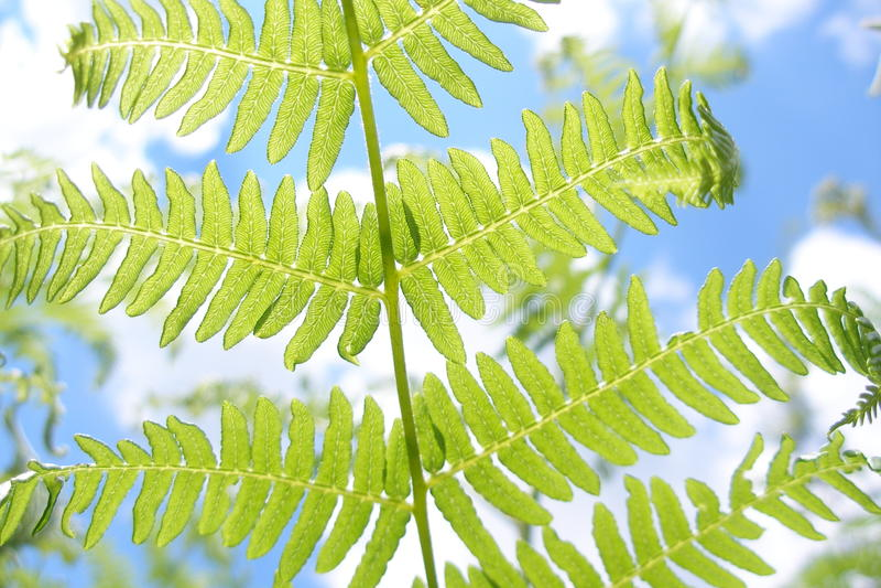 Photosynthesis arkivbild