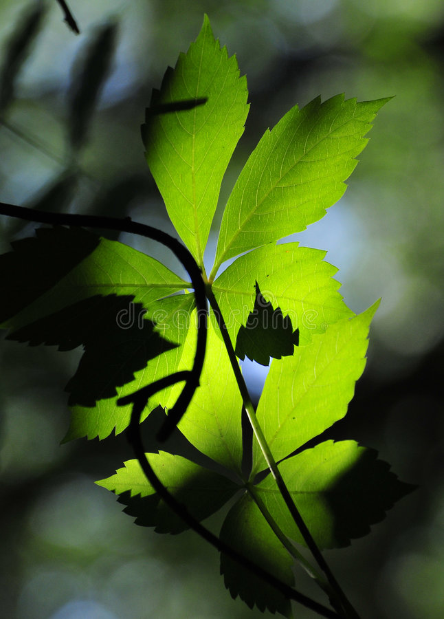 Photosynthesis royaltyfri foto