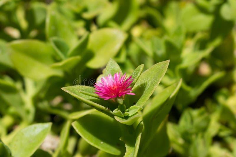phpto för fokus för kaktuscloseblomma som väljs upp royaltyfri foto