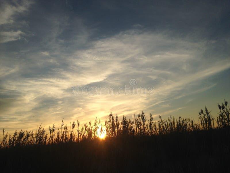 Phragmitesgräs under solnedgång på den Nickerson stranden royaltyfri foto