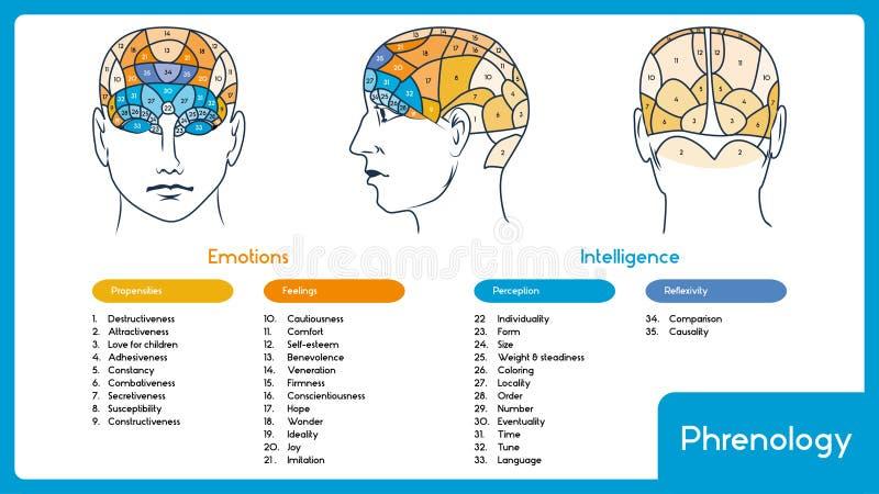 phrenology Head hjärnöversikt royaltyfri illustrationer
