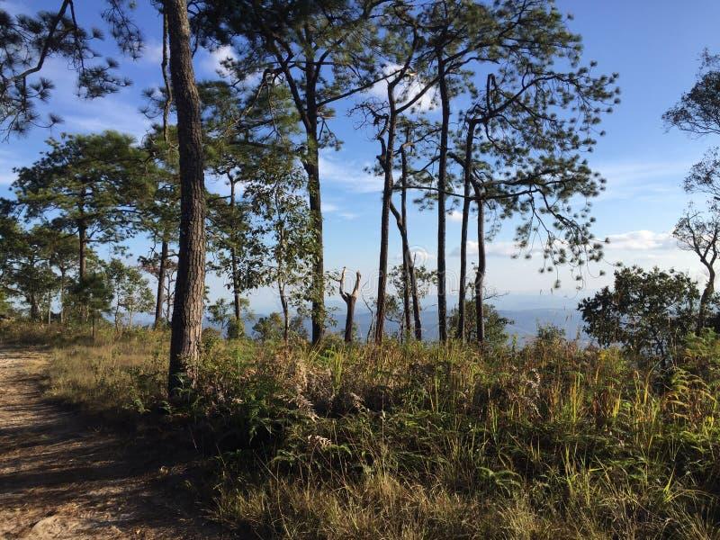 Phu Kradueng国家公园 免版税库存照片