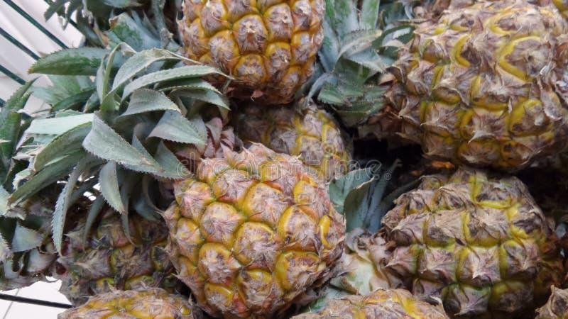 Phu Lae söt ananas arkivbild