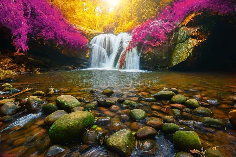 Phu Soi Dao Waterfall con giallo ed il rosa lascia l'autunno degli alberi, fotografia stock libera da diritti