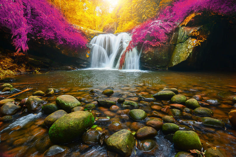 Phu Soi Dao Waterfall with yellow and pink leaves trees autumn,. Beautiful waterfall in rainforest at Uttaradit province, Thailand royalty free stock photography