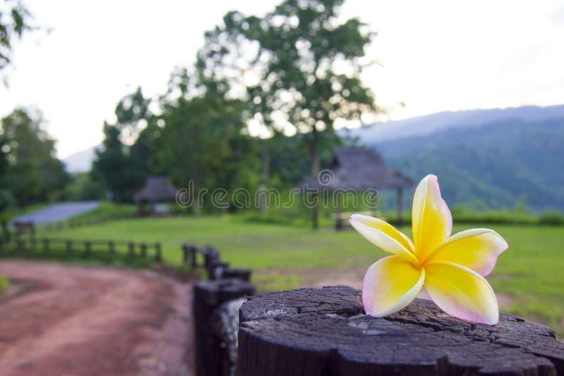 Phu Suan Sai National Park royalty-vrije stock afbeeldingen